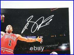 Derrick Rose Psa/dna Signed 16x20 Photograph Autograph Chicago Bulls Mvp Lebron